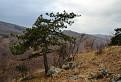 bonsaje Dobrolínskych skál