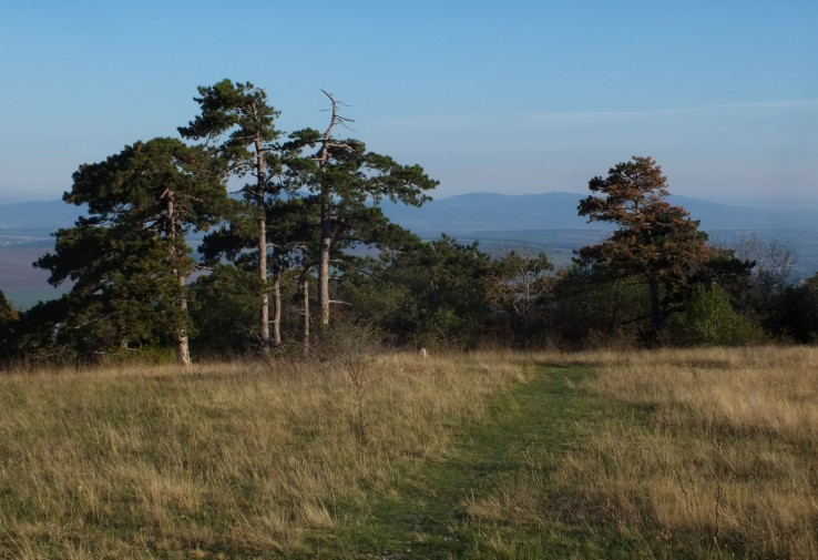 Meškov vrch