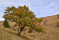 Jarabinový bonsai