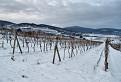 Zima vo vinohradoch / 1.1333