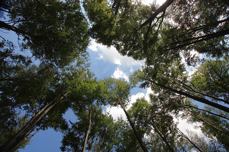 Lesy Vtáčnika II.