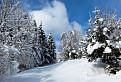 Les pod snehom III.