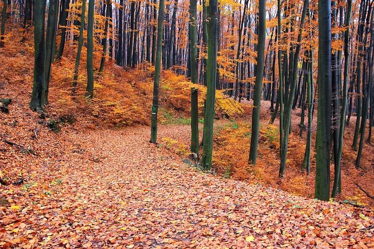 Jesenný koberec