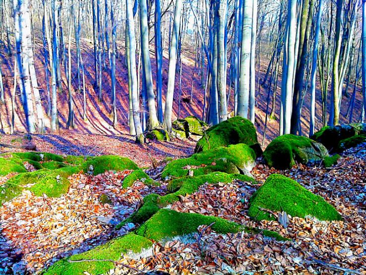 Kamenný les pod Klenovou
