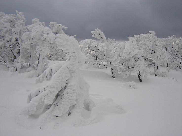 Snehové bonsaje Vtáčnika
