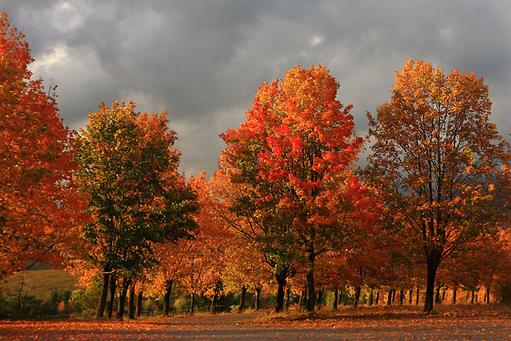 Proste jeseň