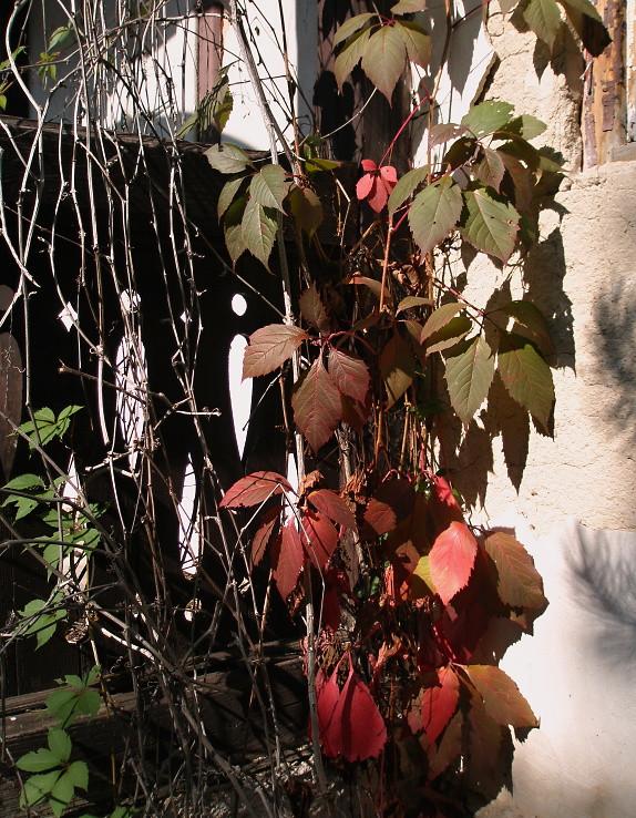 Jesenné zátišie