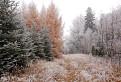 v rozprávkovom lese / 1.1250
