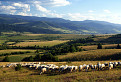 Pomaly ovečky hore dolinami...