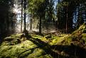 Tajomný Skorušinský les