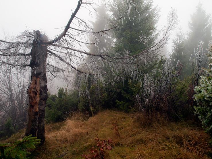 Na Púpove v hmle