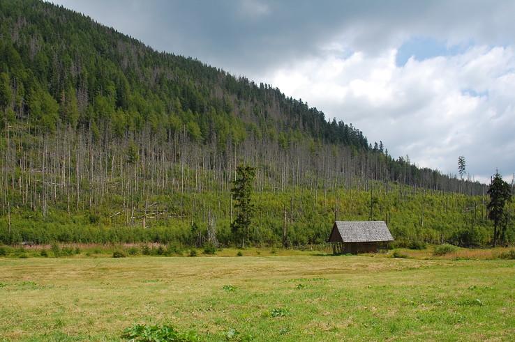 les v Tichej doline