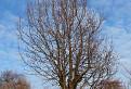 len taký strom