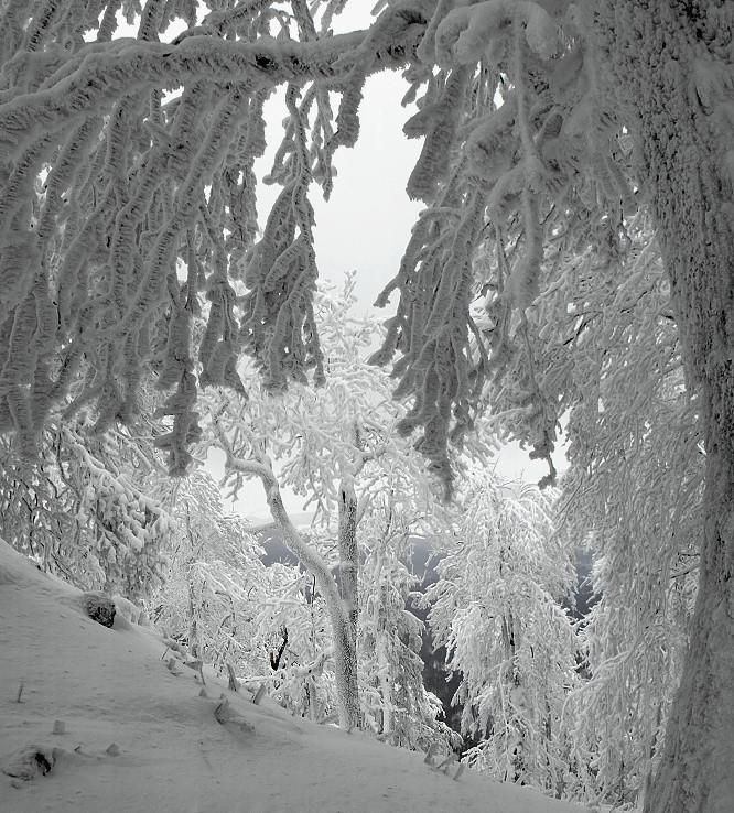 Zima II.