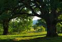 Dubová brána na Gavurkách