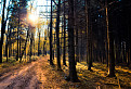 Potulky lesom