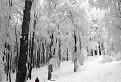 Čaro bielej zimy