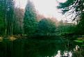 Voda a stromy