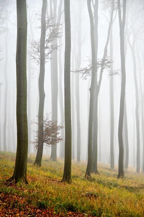Tajomný les v Karpatoch VIII