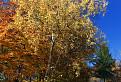 Bielokarpatské brezy
