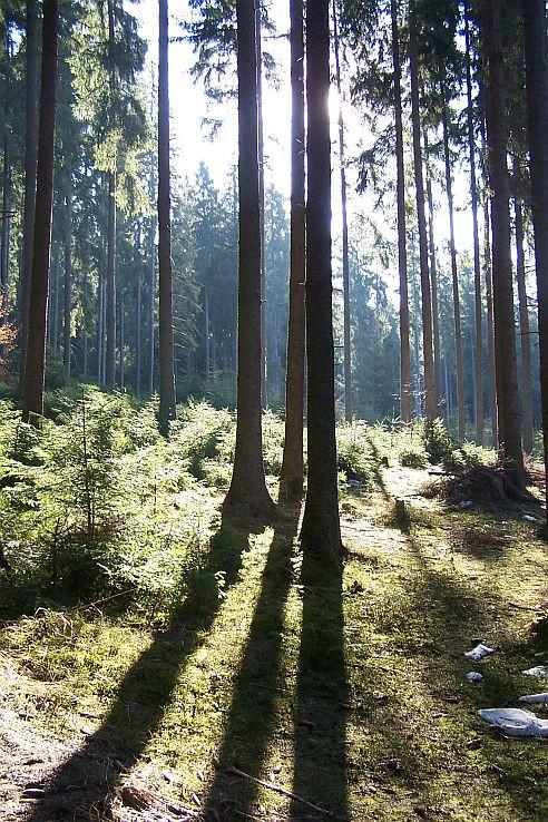 Prebúdzajúci sa les