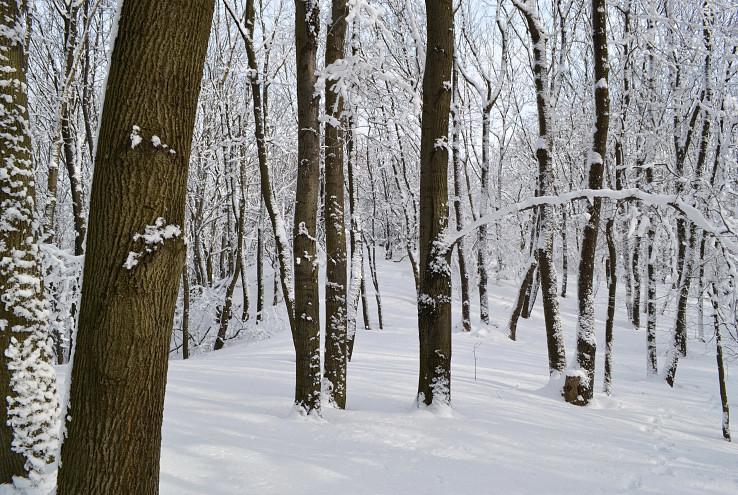 Vlaňajší sneh mackovský.