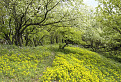 Jar na Malom Roštúne