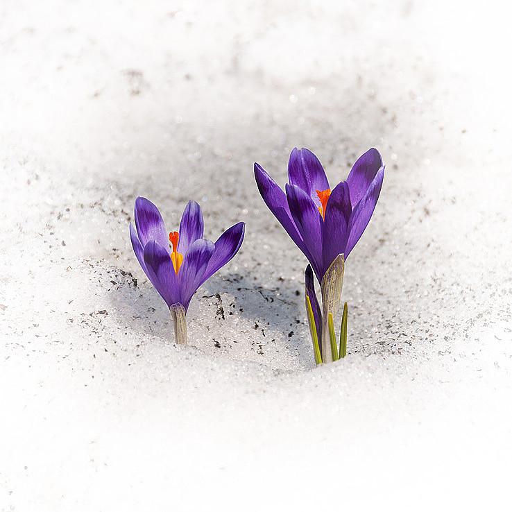 Jar v Raji