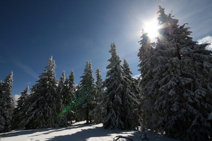 Lesík na Poľane
