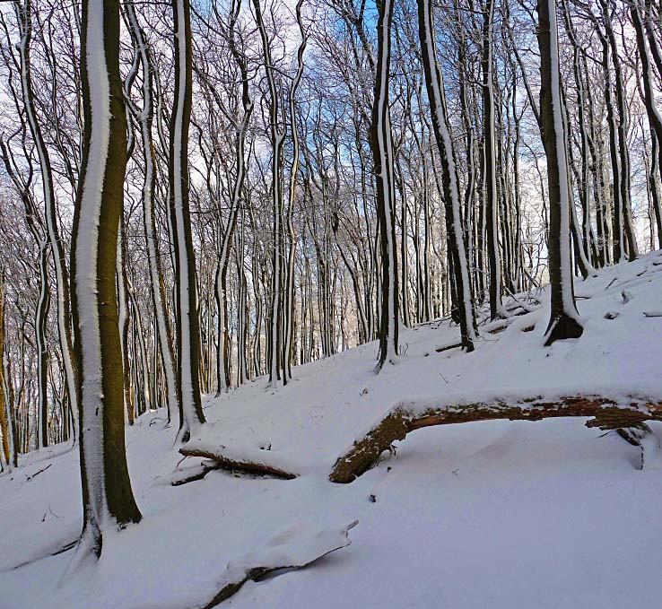 Pruhovaný les