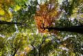 Jesenné chapadlá