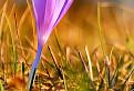 Filaiový kvet