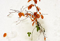 Zimná ikebana / 1.1429