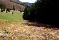 Jar v doline Randavica II