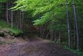 V beskydským lese