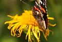 Motýlí krásavec  / 1.0000