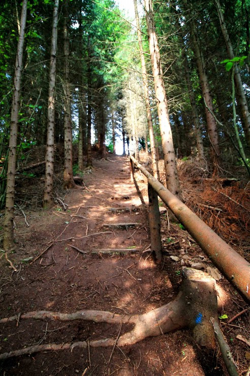 Schody lesa