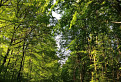podvečer v lese