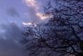 strom pod nebom