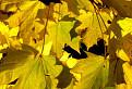 Jeseň pod Muráňom