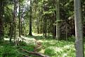 Borovnicovy lesík / 1.4167