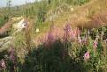 Nejaké kvety