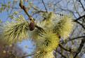 Jar v sádeckých vrchoch