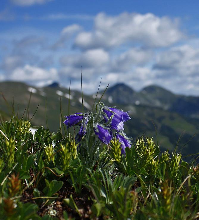 Roháčska jar