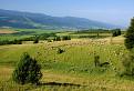 Pomaly ovečky hore dolinami