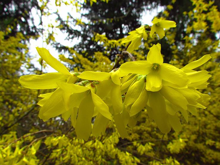 trošku žltej