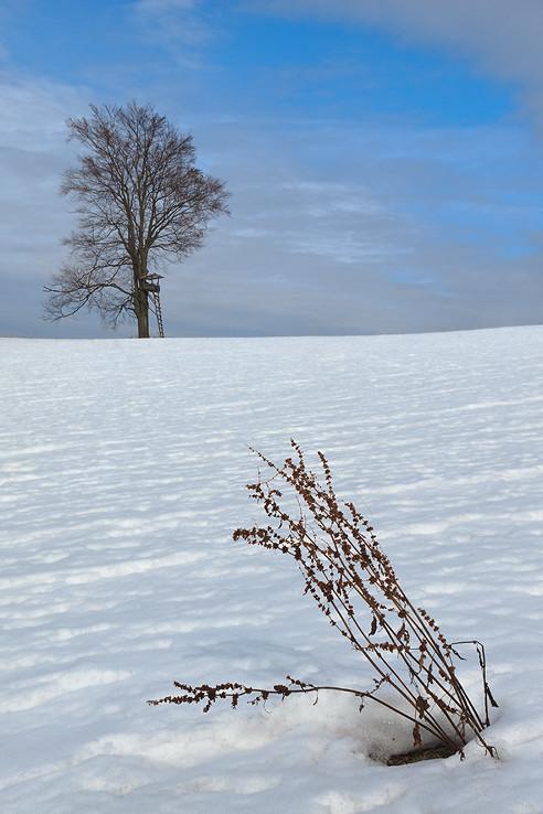 v poslednom snehu ...