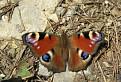 motýľ leta odletel...