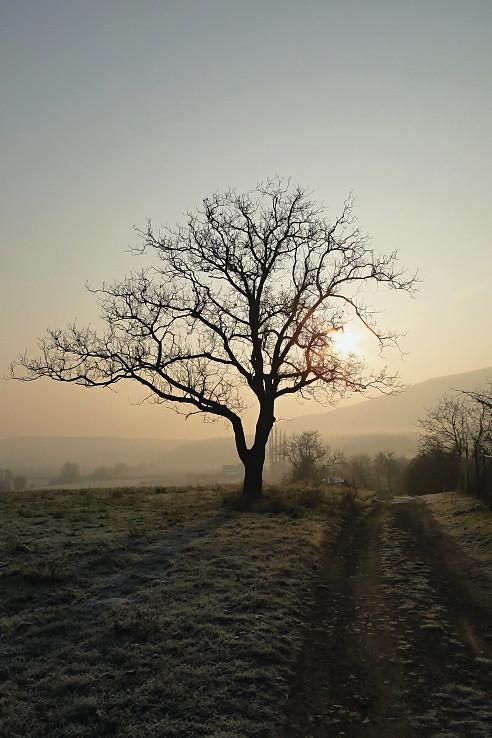 Strom v slnku