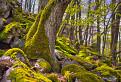 Prales pod Chochuľkou
